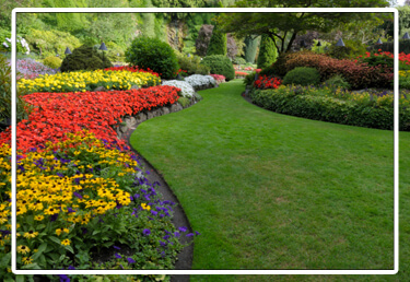 lawn design and installation